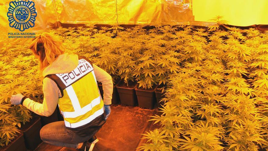 Localitzen un cultiu d'unes 1.000 plantes de marihuana videovigilat les 24 hores en un xalet de Castell d'Aro