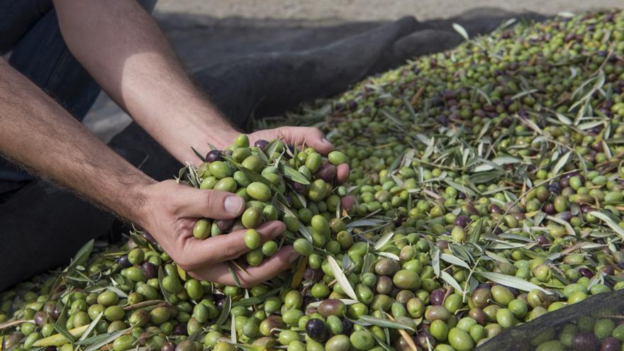 Se buscan jornaleros a cambio de unas 'cajas' de aceite