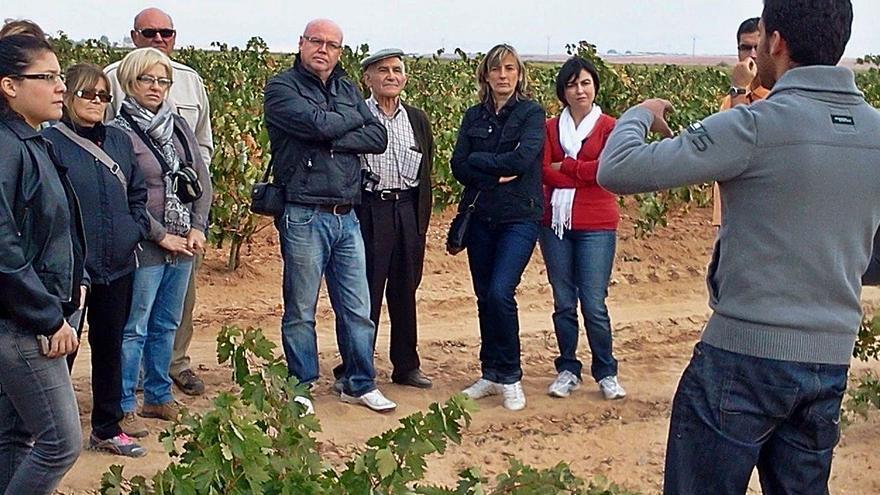 De viaje por los viñedos