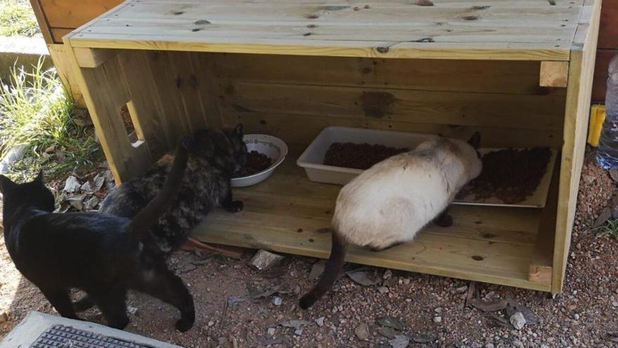 Es manifestaran a Platja d'Aro contra la prohibició d'alimentar gats al carrer