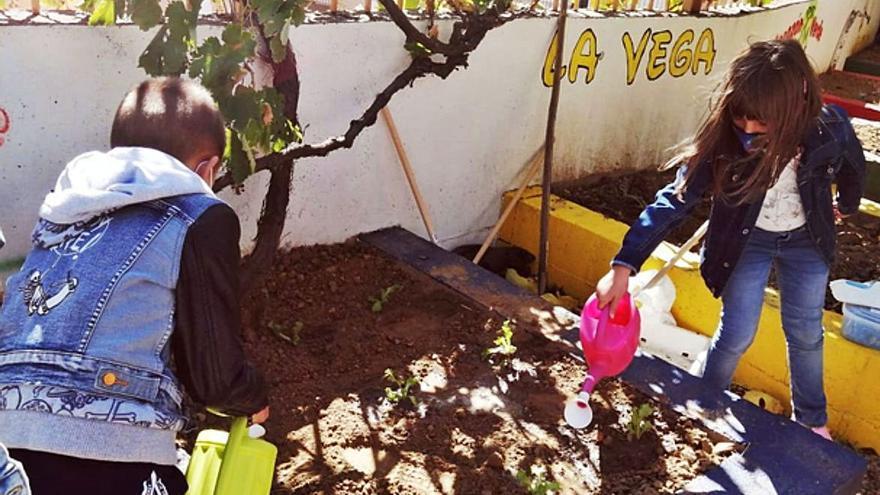 "El huerto escolar del Virgen de la Vega de Benavente ""vuelve a latir"""