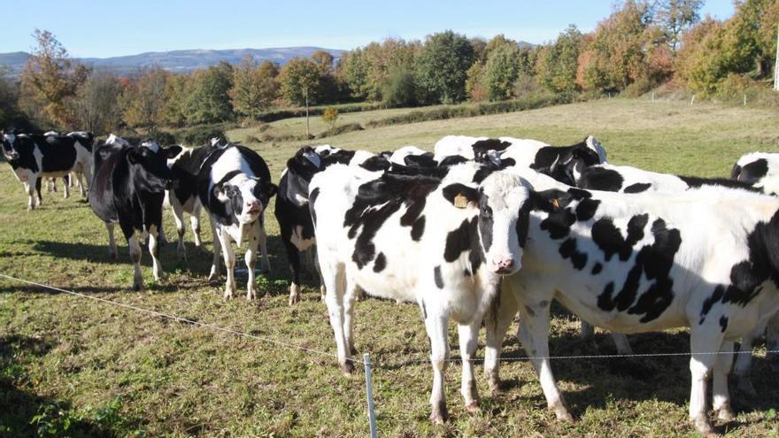 El precio de la leche sube en Galicia en noviembre hasta 32,6 céntimos