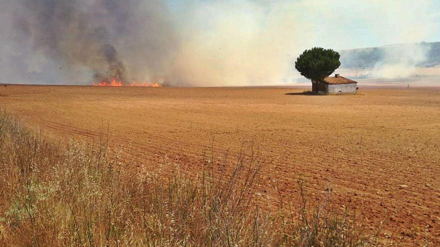 Un incendio en Morales de Toro destruye dos parcelas de cereal sin cosechar