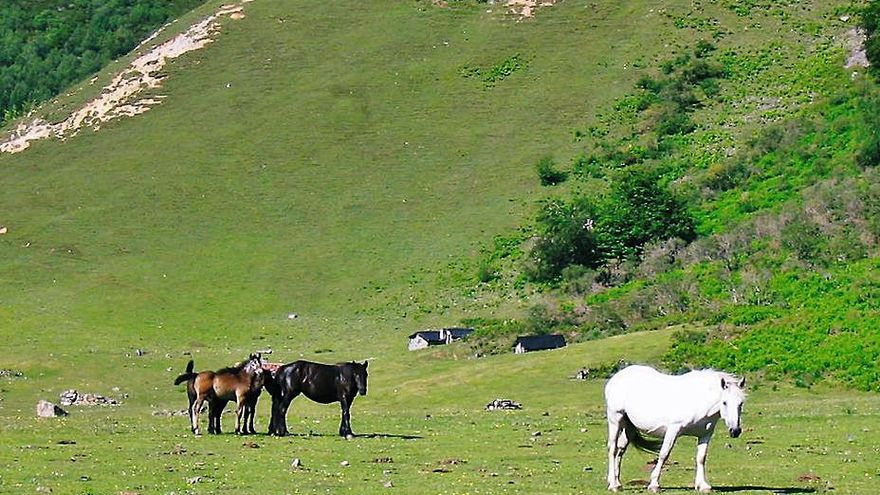 Polémica por los montes en Caso: Tarna pide la propiedad de varias áreas públicas
