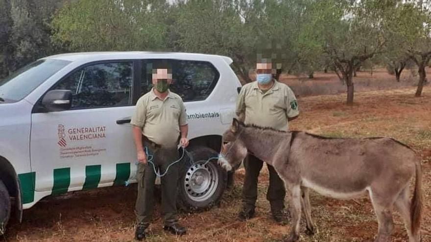 """Rescatan otro burro """"fugado"""" del Desert de  les Palmes"""