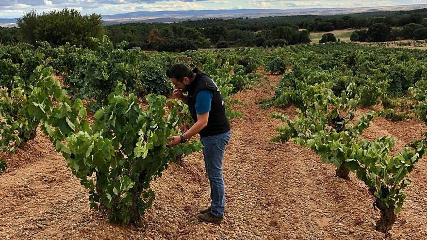Un vino de un asturiano en El Bierzo, candidato a revelación del año