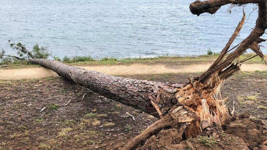 El viento alcanza los 119,9 kilómetros por hora en Cuntis
