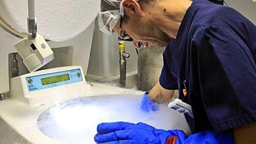 Creix el nombre de dones que congelen els seus òvuls