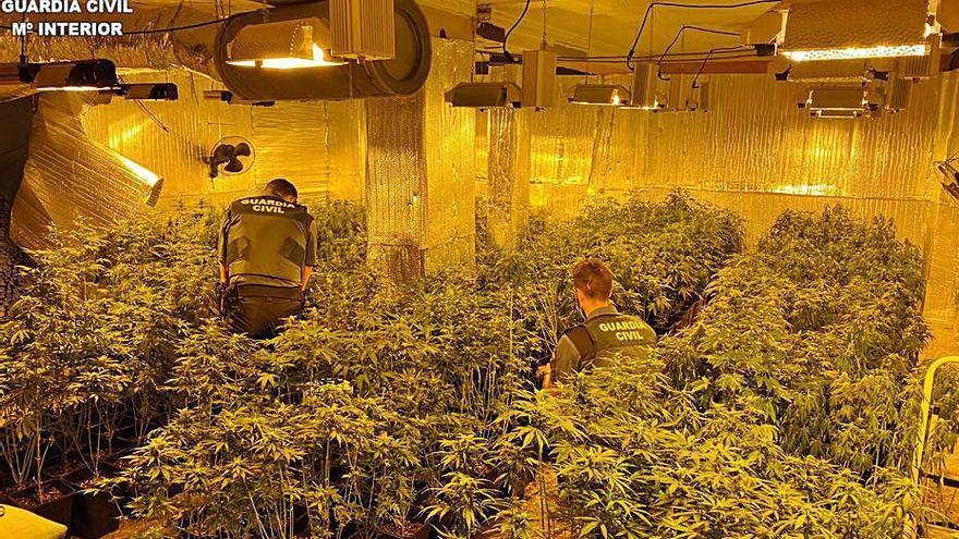 Dos detenidos por una plantación ilegal de marihuana en Millares
