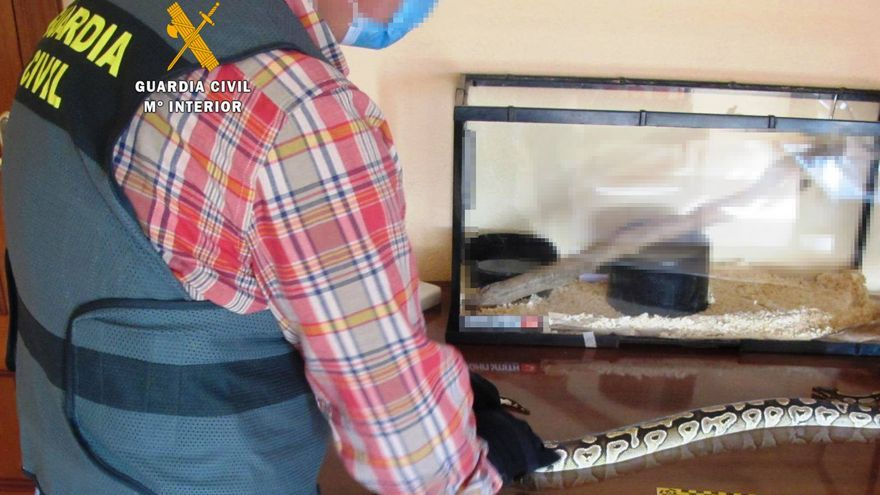 La Guardia Civil  abre expediente en Corrales, Zamora, a un ciudadano que portaba en el coche una pitón real