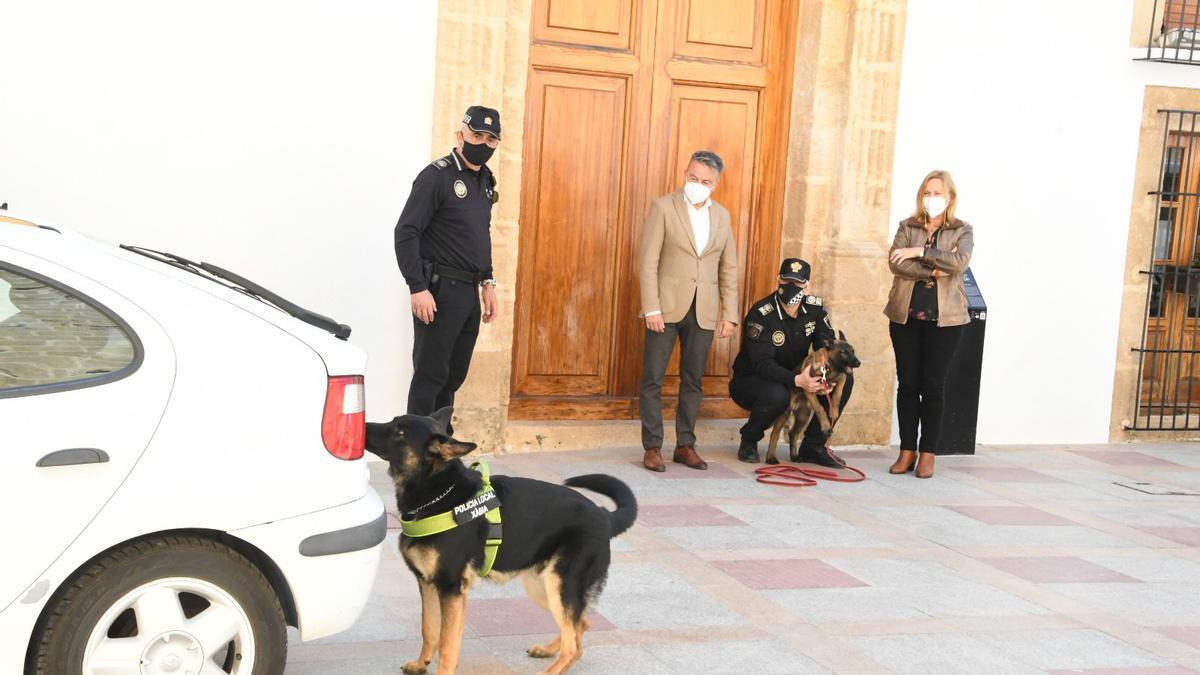 El nuevo miembro de la unidad canina de Xàbia