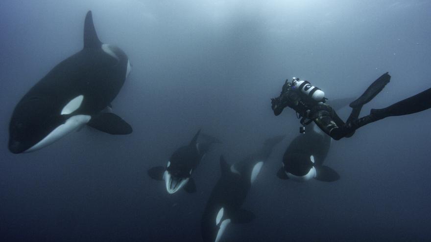 James Cameron descubre 'Los secretos de las ballenas' para Disney+