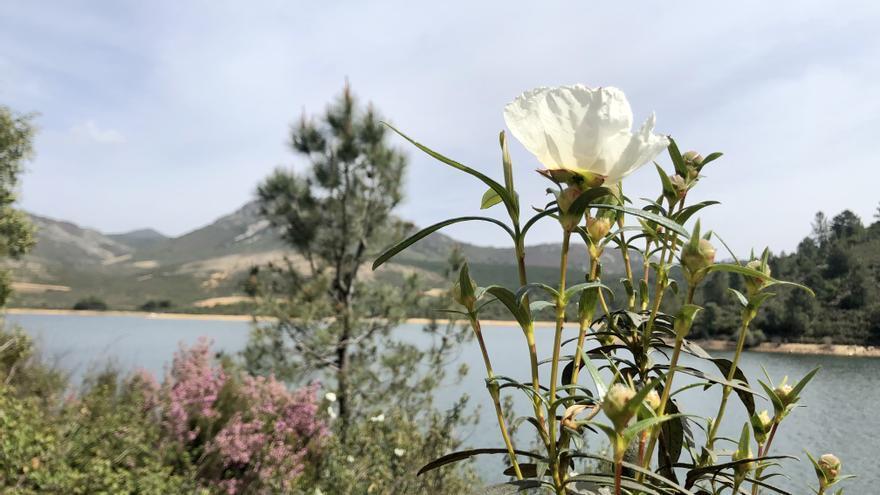 El pantano de Cañamero aspira a ser nueva playa de Extremadura