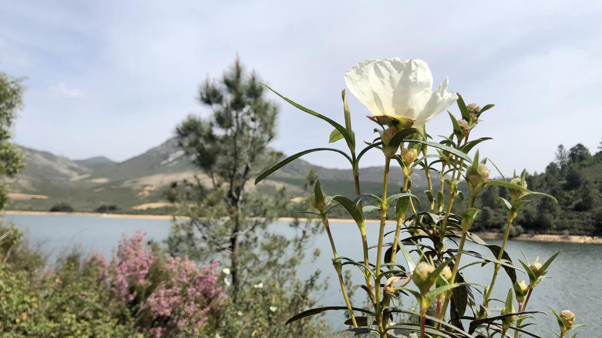Preciosa imagen captada del pantano de Cancho del Fresno en Cañamero.