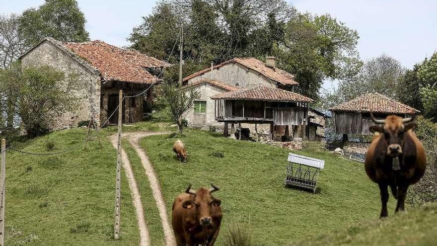 La comarca cuenta con 23 enclaves deshabitados, la mayoría en Castrillón