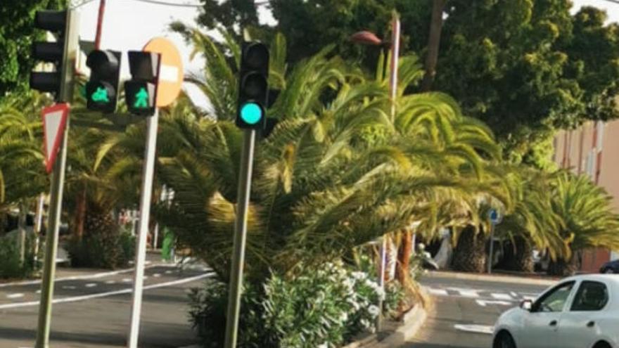 Varios colectivos piden que se poden las palmeras de la avenida de Los Majuelos