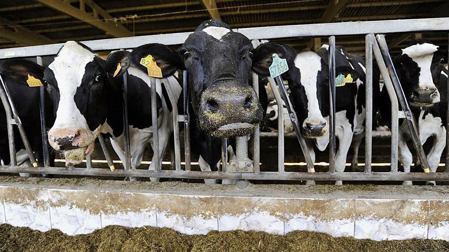 El sector lácteo se moviliza para exigir a la industria que garantice los costes de producción