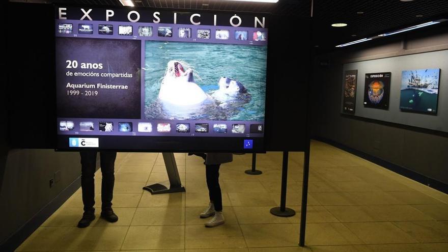 El Aquarium de A Coruña repasa en 53 carteles sus 20 años de historia