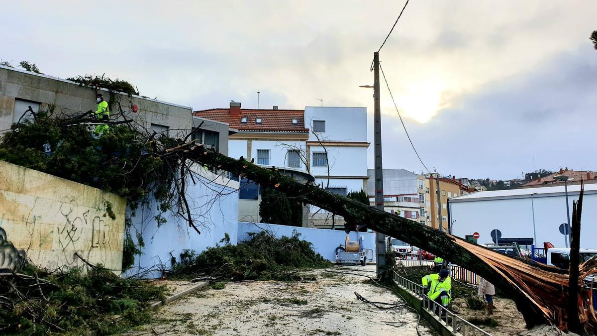 Operarios municipales trabajan para retirar el árbol caído en Teis. // Marta G. Brea
