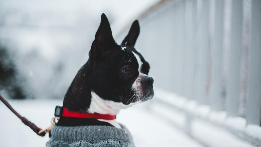 ¿Cuánto frío puede aguantar un perro?