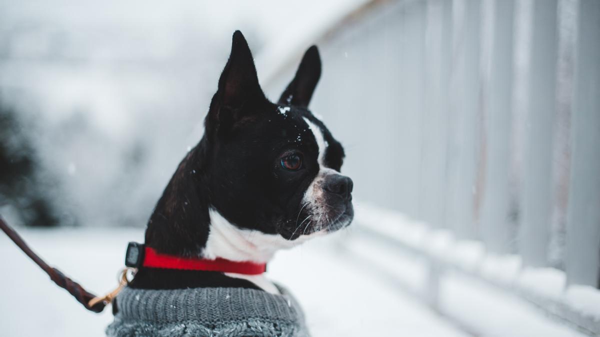 Cuánto frío puede aguantar un perro