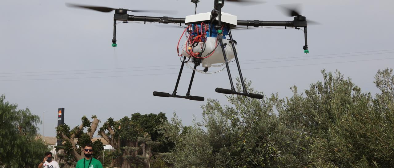 Presentación ayer junto a la torre del Gall de la Hoya del dron que transporta el tratamiento contra las plagas.