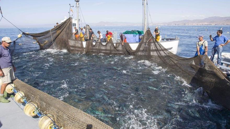 El Mediterráneo: la cuna del atún rojo