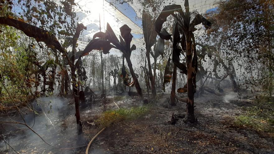 Los bomberos apagan el fuego en un finca de plátanos en Arucas