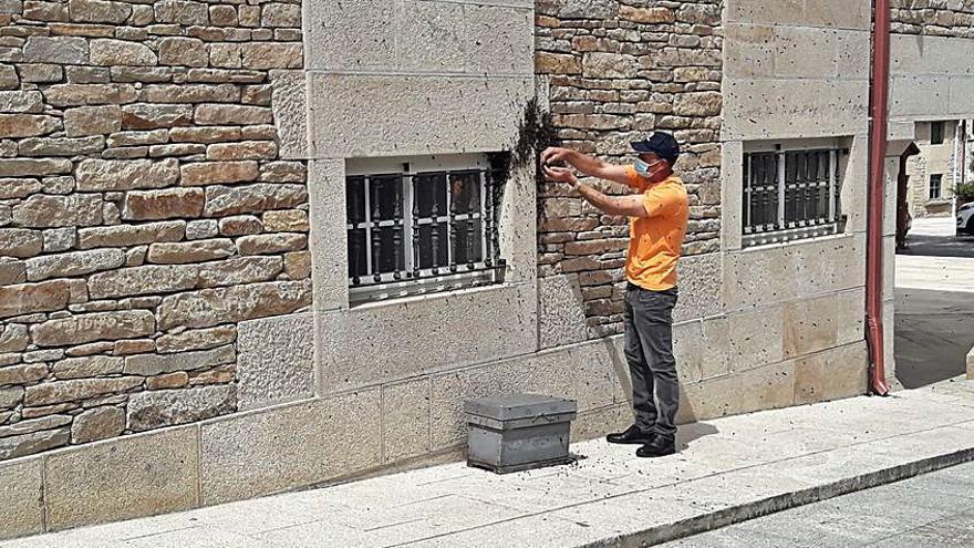 Un voluntario de Protección Civil retira un enjambre de abejas en el entorno del consistorio de Agolada