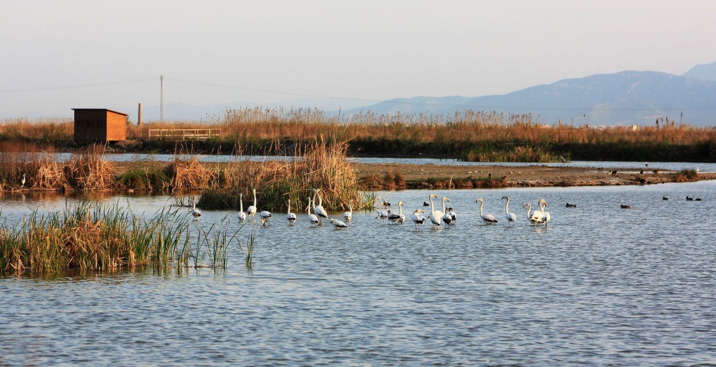 Un paseo por los humedales más bonitos de la Comunitat Valenciana