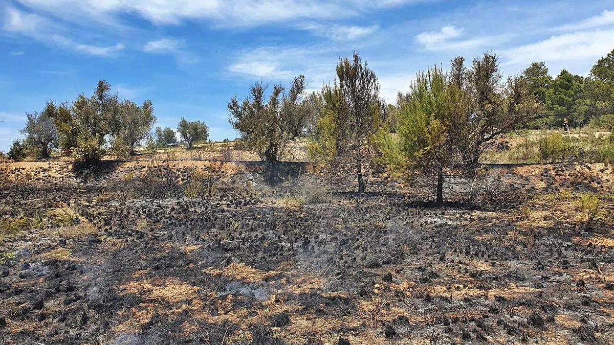 Conato de incendio en el término de Enguera | LEVANTE-EMV