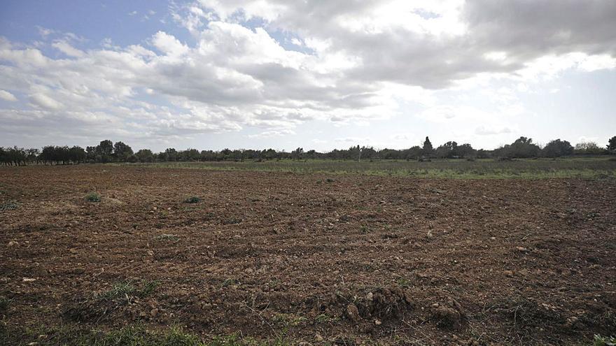 Los agricultores reclaman de Mallorca herramientas para afrontar la sequía
