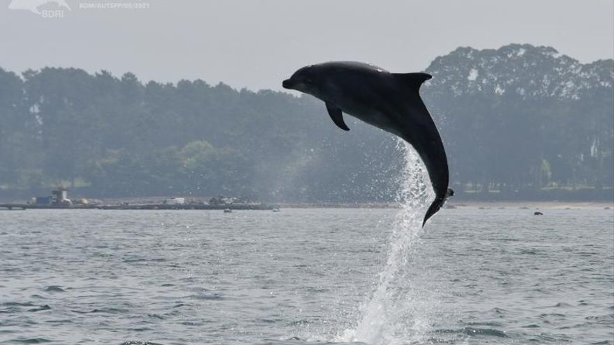 Los delfines también son de río