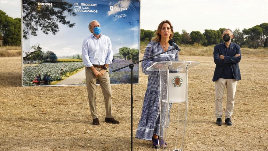Arrancan los trabajos en los Campos del Canal para dar comienzo al 'Bosque de los Zaragozanos'