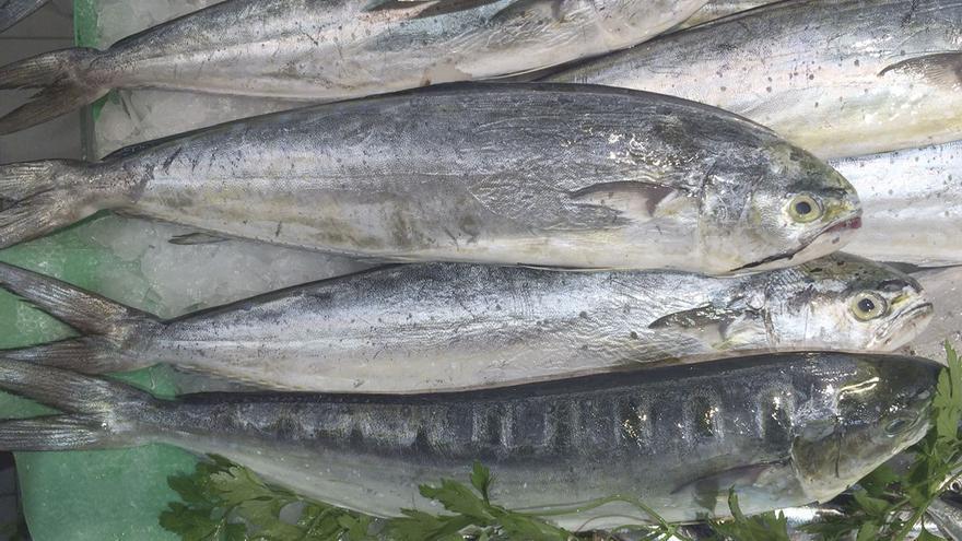 El primer mes de captura  de Llampuga se salda  con 57 toneladas
