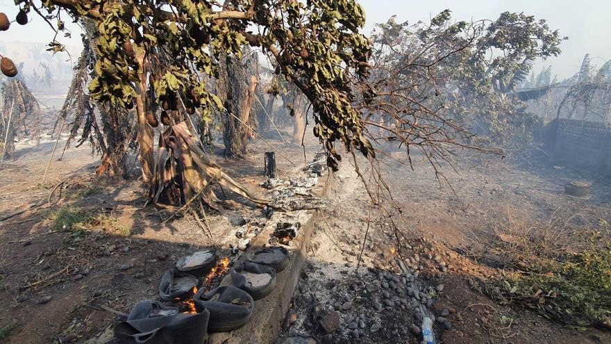 Más de 10 millones de euros en indemnizaciones en la agricultura por la ola de calor que afectó a Canarias en agosto