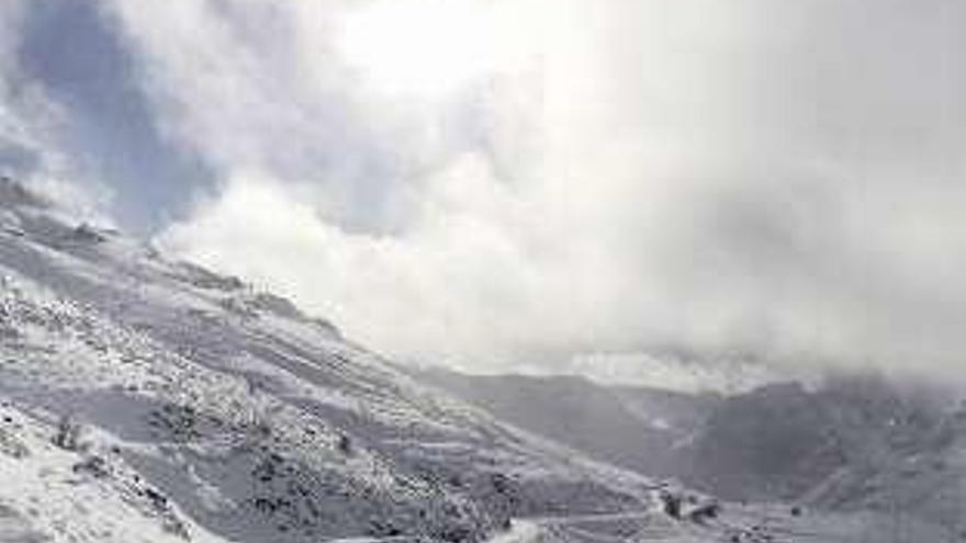 El calentamiento le saca los colores al gorrión alpino