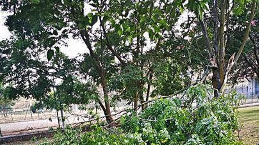 La tormenta deja 4,18 litros por metro y causa daños en árboles y cableado en Benavente