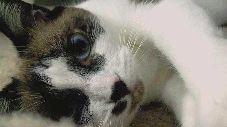 ¿Un gato tras una leucemia?
