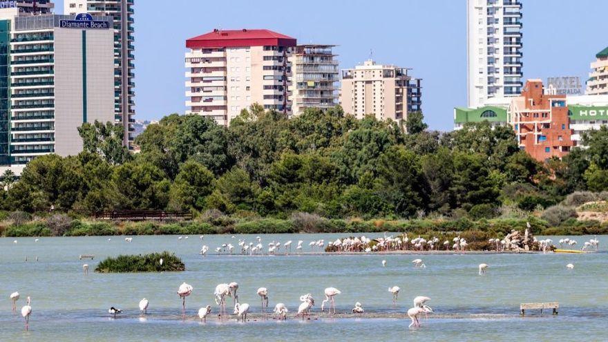 Calp da alas al turismo ornitológico