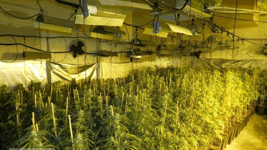 Dos detinguts per cultivar marihuana en dos masos del Pla de l'Estany