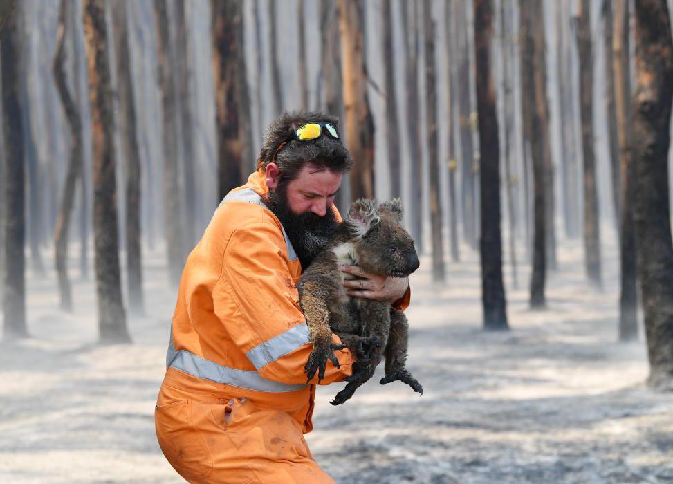 Incendios en Australia | Enero