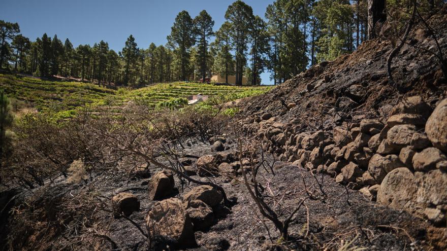 403.000 euros en indemnizaciones a productores de uva de Canarias