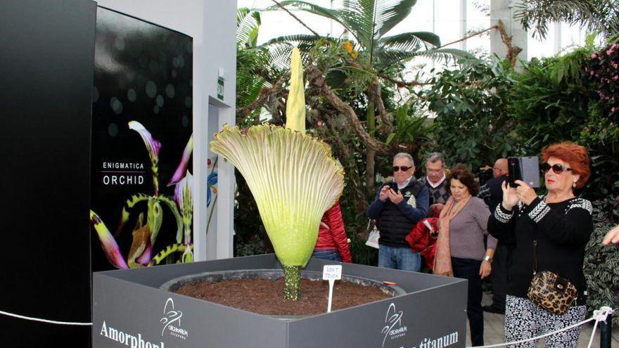 El Parque Botánico de Estepona acoge la celebración de la VI Feria de Orquídeas