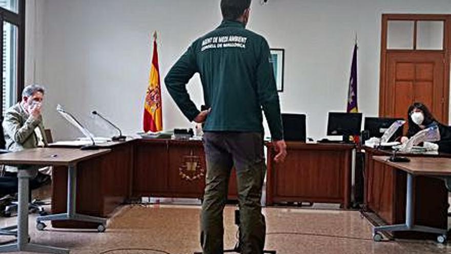 Piden un año de prisión a un cazador furtivo de jilgueros en Palma