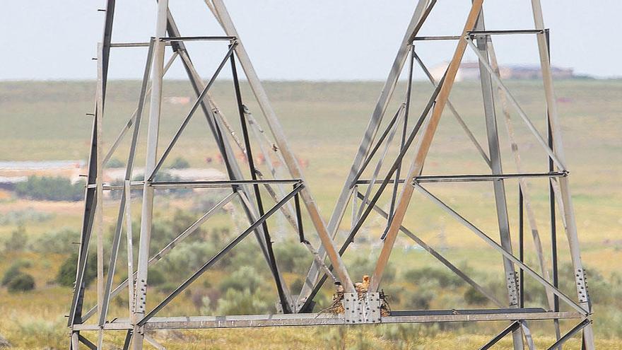 Las líneas eléctricas, aliadas de la AVIFAUNA