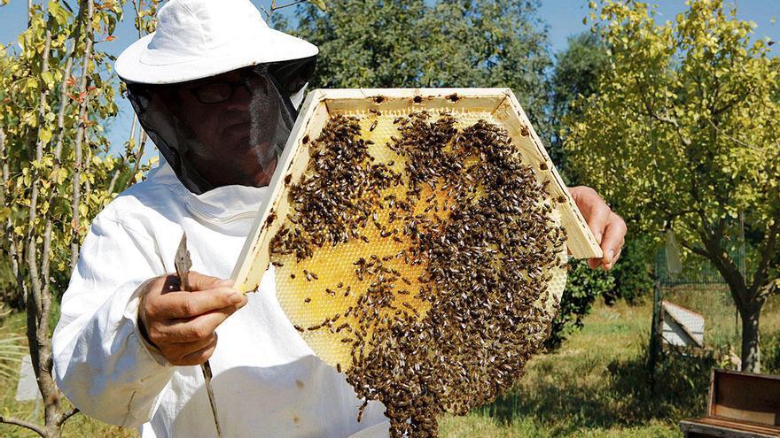 Gutes Jahr für die Bienen auf Mallorca