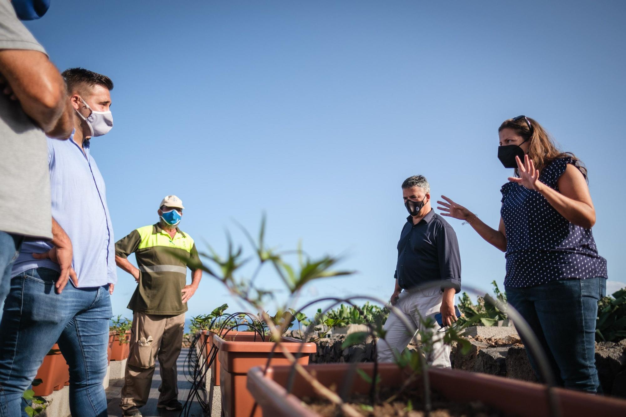 La conservación de la batata