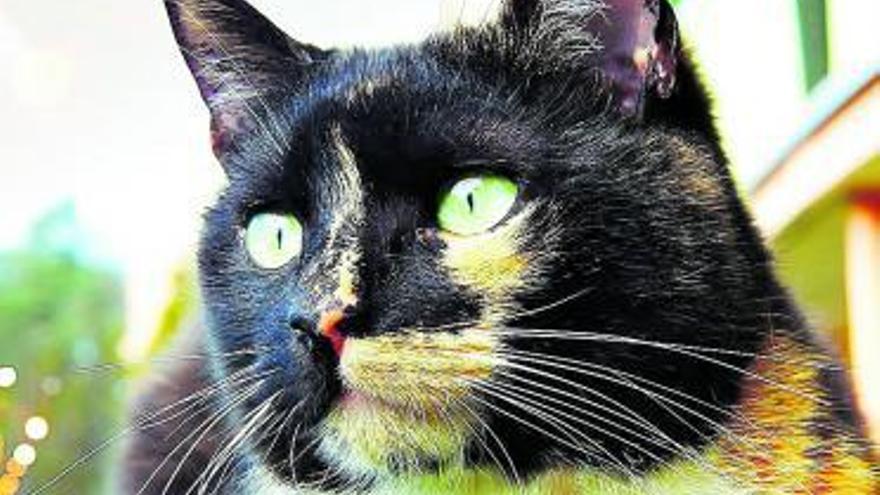 La veterinaria de mis gatos soy yo
