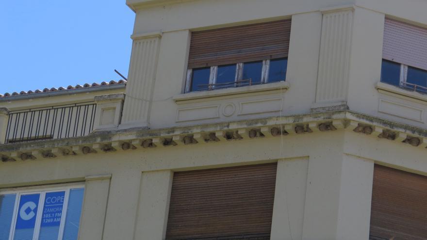 Destruida la mayor colonia de avión común de Zamora